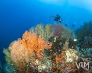 Rick & the gorgonian-3